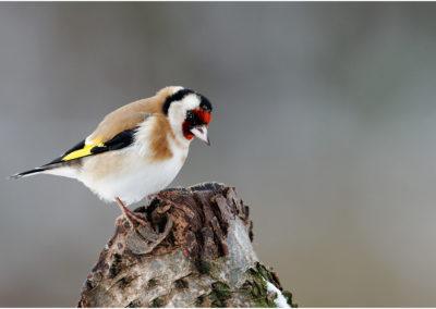 Vögel – Wolfgang Bussler