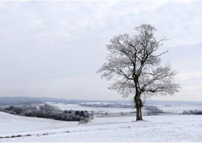 Bäume von Wolfgang Bussler